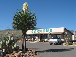 a blooming cactus stands in front of the arizona botanical gardens in clarkdale az