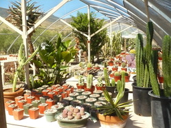 the cactus and desert plant nursery